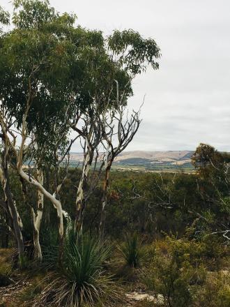 The Mclaren Basin